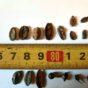 Encuentran semillas y fragmentos vegetales de 5.000 años de antigüedad